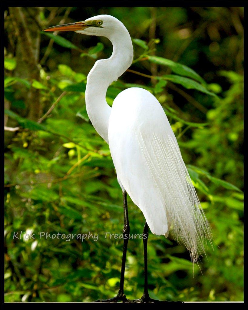 Klick Photography Treasures Bird